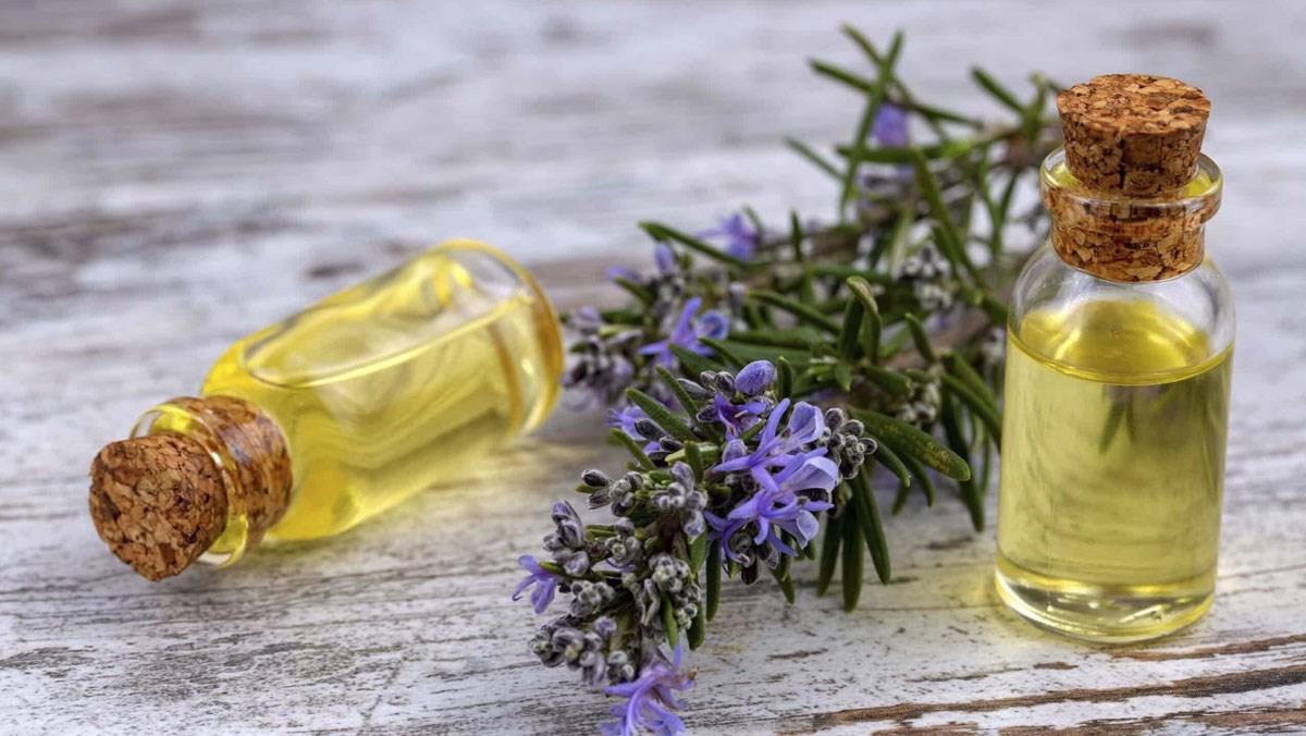 Tinh dầu thảo dược từ hương thảo tươi