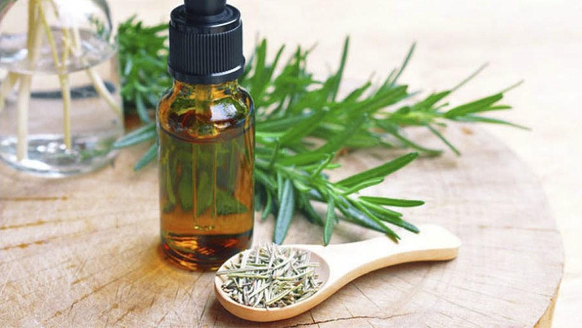 Tinh dầu hương thảo từ hương thảo khô